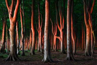 Heiko Gerlicher, Wald VIII (Deutschland, Europa)