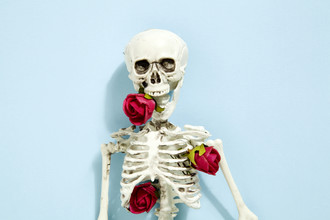 Loulou von Glup, Rose skeleton (Belgium, Europe)