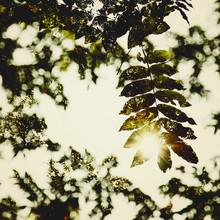 Nadja Jacke, Autumn leaves in the sunlight (Germany, Europe)
