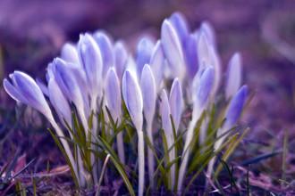 Silva Wischeropp, Ultra Violetter Frühlings Sound (Deutschland, Europa)