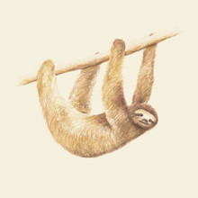 Florent Bodart, Mr. Sloth (, )