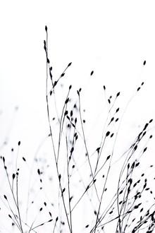 Monika Strigel, BLACK GRASS (Deutschland, Europa)