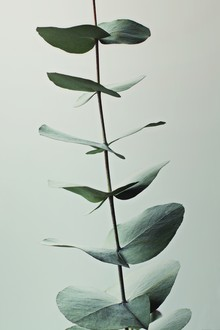 Monika Strigel, EUCALYPTUS GREEN (Germany, Europe)