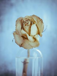 Gabriele Brummer, The Rose (Germany, Europe)