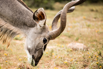 Steffen Rothammel, Antilope (South Africa, Africa)