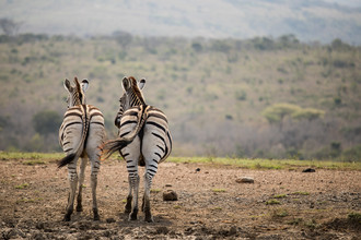 Steffen Rothammel, Friends (South Africa, Africa)