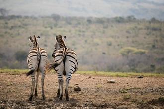 Steffen Rothammel, Friends (Südafrika, Afrika)