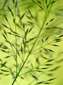 Doris Berlenbach-Schulz, Grass in motion (Italien, Europa)