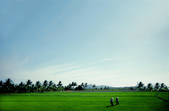Michael Schöppner, Paddy field (Vietnam, Asien)