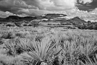Yvette Cruz, Tequila (Mexiko, Lateinamerika und die Karibik)