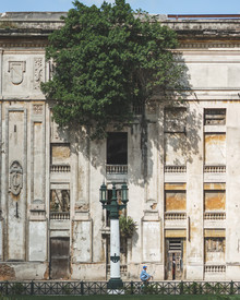 Dimitri Luft, housetree (Cuba, Latin America and Caribbean)