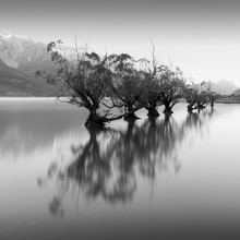 Christian Janik, WILLOW TREES (New Zealand, Oceania)