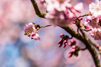 Sebastian Rost, Spring time (Germany, Europe)