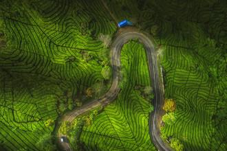 Jean Claude Castor, Indonesien Java Ciwidey Teeplantage (Indonesien, Asien)