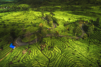 Jean Claude Castor, Indonesien Bandung Teeplantage aus der Luft (Indonesien, Asien)
