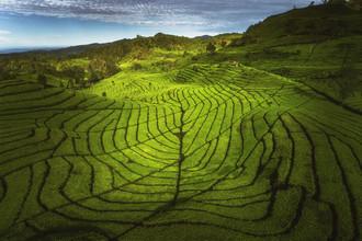 Jean Claude Castor, Indonesische Teeplantage auf Java (Indonesien, Asien)