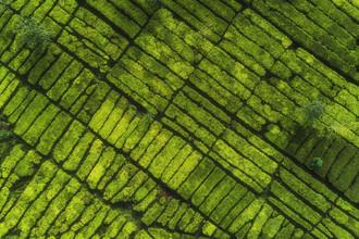 Jean Claude Castor, Teeplantage von oben (Indonesien, Asien)