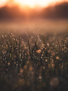 Gergo Kazsimer, Morning Dew (Germany, Europe)
