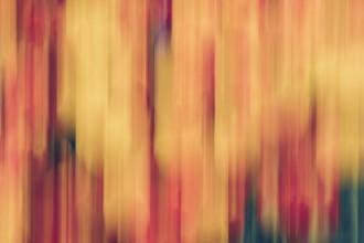 Nadja Jacke, blurred tulip bed (Germany, Europe)
