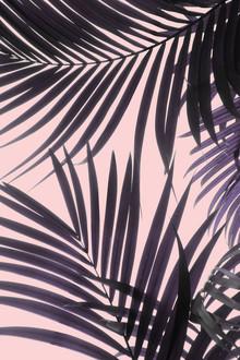 Emanuela Carratoni, Pink Jungle (Italien, Europa)