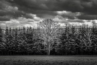 Vive le vélo: Mother tree - Fineart photography by Brian Decrop