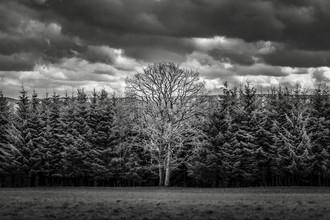 Brian Decrop, Vive le vélo: Mother tree (Belgien, Europa)