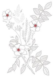 Dunia Nalu, Rose Gardens (Brazil, Latin America and Caribbean)