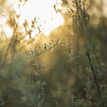 Nadja Jacke, Blühende Bruch - Weide in der Frühlingssonne (Deutschland, Europa)