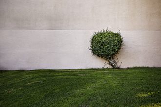 A Tree - fotokunst von Jeff Seltzer