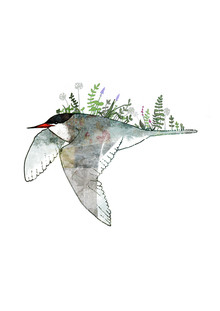 Katherine Blower, Arctic Tern (United Kingdom, Europe)