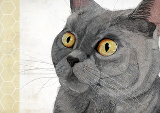 British Shorthair - fotokunst von Katherine Blower