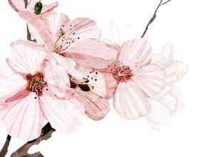 Katherine Blower, Cherry blossom (Großbritannien, Europa)