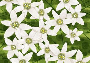 Katherine Blower, Jasmine Flowers (Großbritannien, Europa)