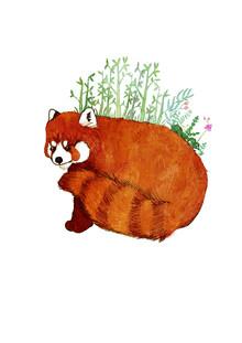 Katherine Blower, Red Panda (United Kingdom, Europe)