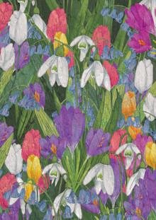 Katherine Blower, Spring Flowers (Großbritannien, Europa)