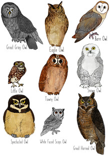 Katherine Blower, Types of Owls (United Kingdom, Europe)