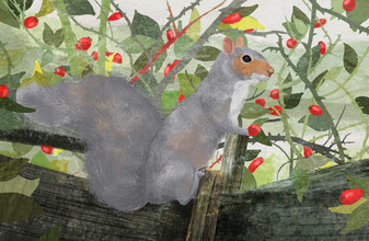Grey Squirrel - fotokunst von Katherine Blower