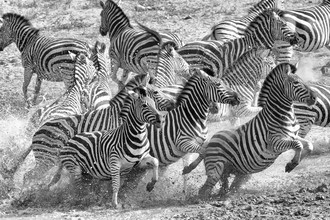 Angelika Stern, Flucht am Wasserloch (Südafrika, Afrika)