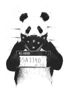 Bad panda - fotokunst von Balazs Solti