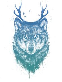 Balazs Solti, Deer wolf (Hungary, Europe)