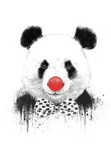 Balazs Solti, Clown panda (Ungarn, Europa)