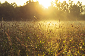 Nadja Jacke, Meadow with tall grass and fog to the sunrise (Germany, Europe)