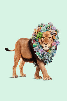 Sukkulenten Löwe - fotokunst von Jonas Loose