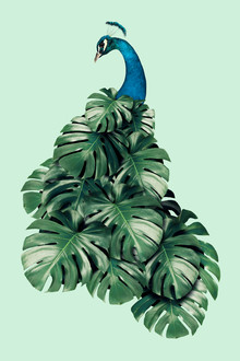 Jonas Loose, Monstera Bird (Mexico, Latin America and Caribbean)