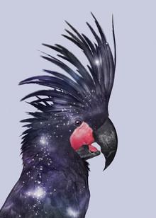Jonas Loose, Galaxy Bird (Australia, Oceania)