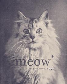 Florent Bodart, Famous Quote Cat (France, Europe)