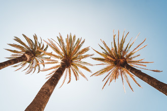 Andi Weiland, Under Palm Trees (Portugal, Europe)