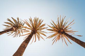 Andi Weiland, Unter Palmen (Portugal, Europa)
