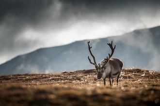 Sebastian Worm, The Reindeer (Spitzbergen, Europa)