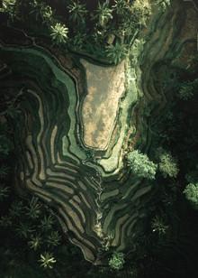 Fin Matson, Rice field Dreams (Indonesien, Asien)
